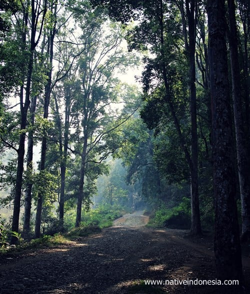 jalan menuju kareumbi