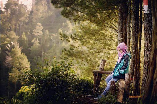hutan pinus karacak