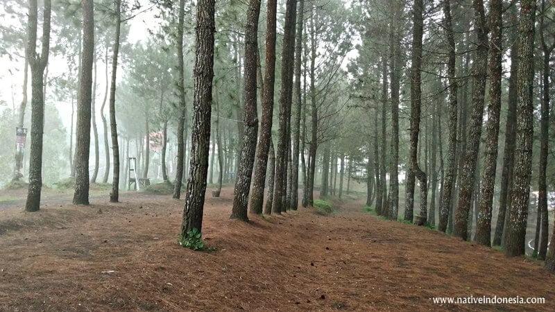hutan pinus di Kamojang ecopark garut
