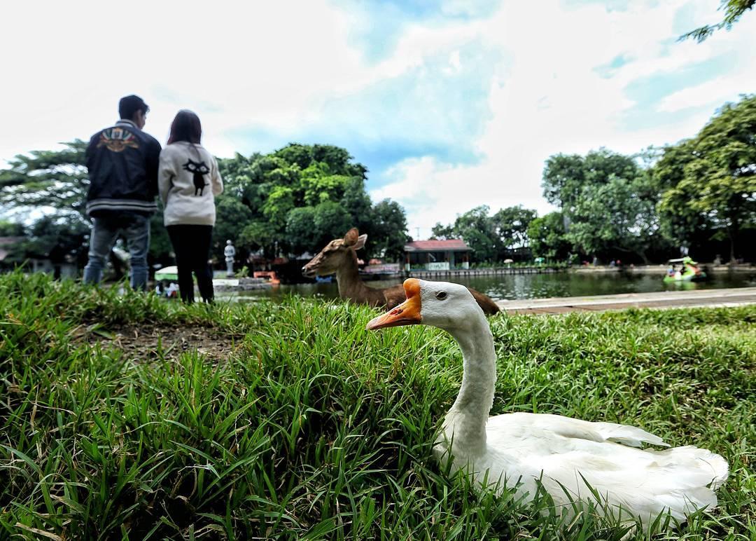 Taman Balekambang Solo View 1