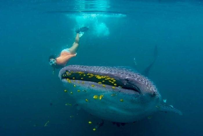 Teluk Triton Whale Dive