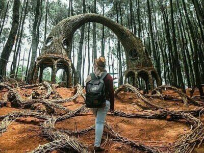 Hutan Pinus Pengger, Ladang Perburuan Foto Instagramable