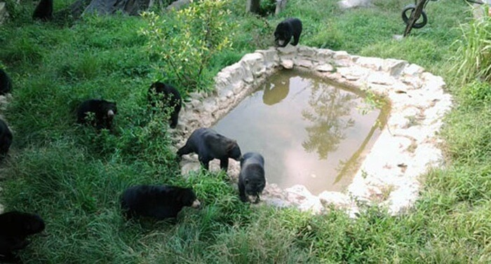 Konservasi beruang madu