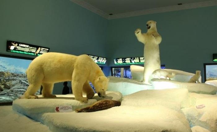 Diorama Beruang Kutub Museum Satwa