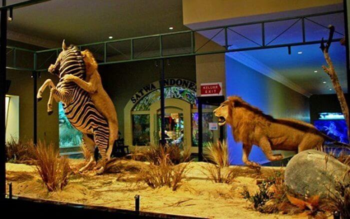 Diorama Savana museum satwa