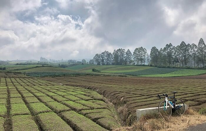 Perkebunan di sekitar Pura Luhur Giri Arjuno