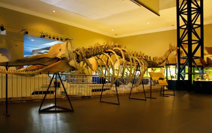 fosil Museum Satwa