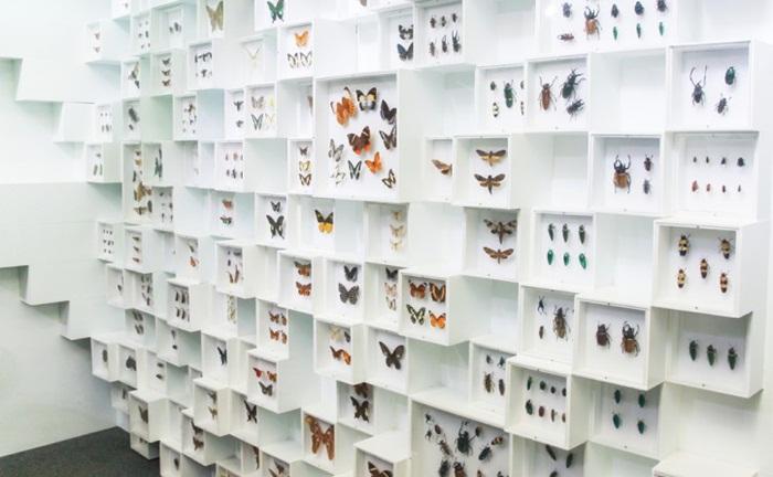 insektarium Museum Satwa