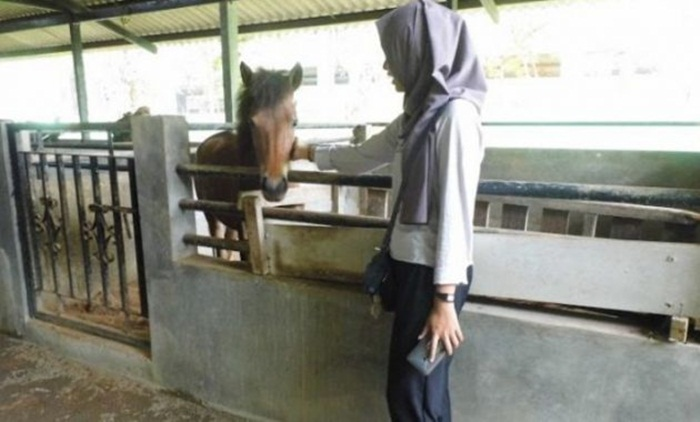 kandang kuda kalipancur