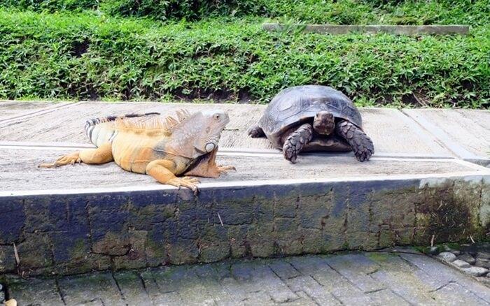 koleksi reptil taman satwa taman kyai langgeng magelang