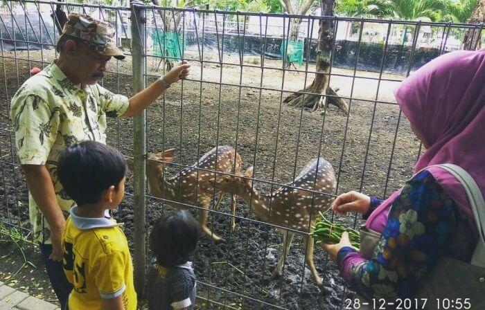mini Zoo kebun bibit wonorejo memiliki koleksi rusa dan beberapa jenis burung
