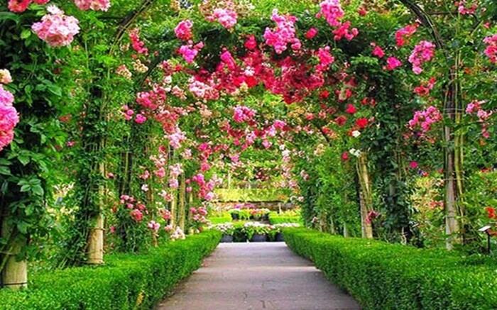 trowongan cantik berhiaskan ratusan tangkai bunga menjadi slaah satu andalan taman begonia