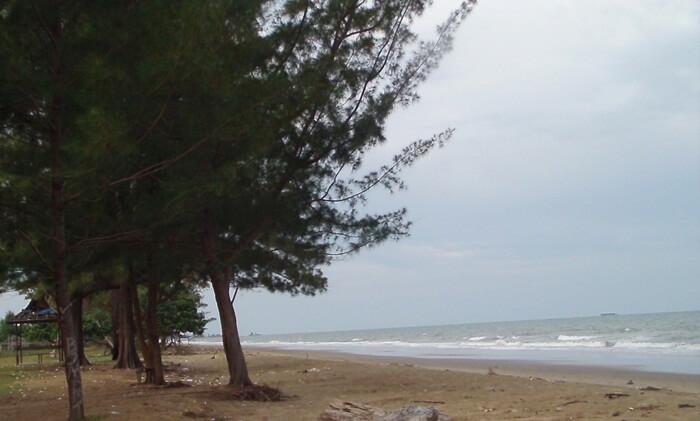 Pinus pantai swarangan memebrikan kesejukan dan tempatberteduh bagi pengunjung pantai.