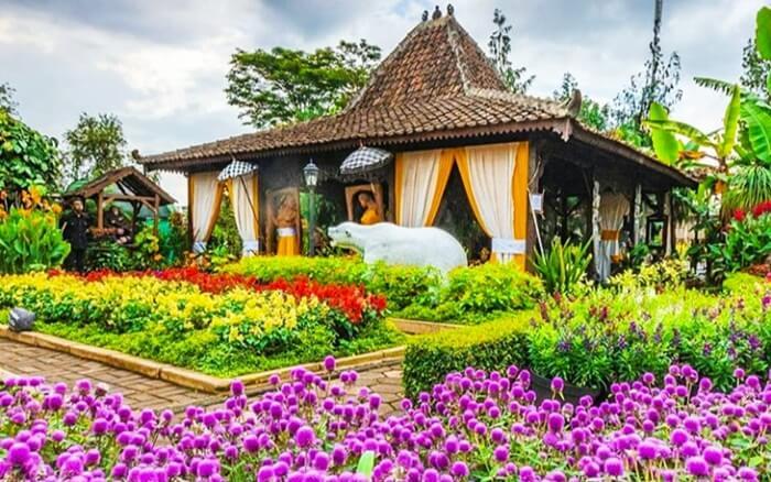 taman bunga aneka warna dengan penataan yang serasi menjadi daya tarik utama taman begonia bandung