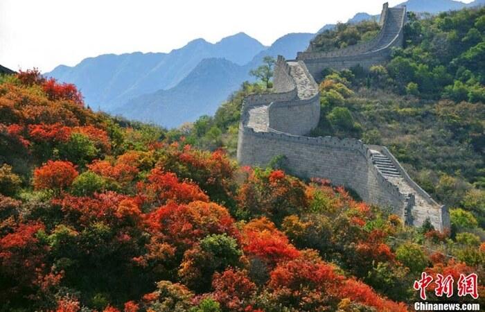tempat wisata di Beijing Taman Hutan Nasional Badaling Beijing mencakup 56 hektar, dan ditanami lebih dari 50.000 pohon maple.