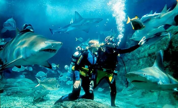Di tempat wisata di Melbourne ini pengunjung dapat berjalan-jalan di bawah dinding kaca yang besar dengan ikan yang bebas berenang di kanan – kiri pengunjung