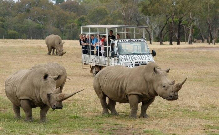 Di tempat wisata di Melbourne ini pengunjung akan menemukan berbagai pemandangan menakjubkan dari binatang yang hidup di padang seluas 225 hektar.