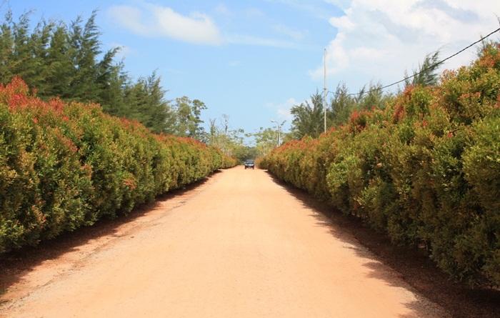 Tempat wisata Bangka Bangka Botanical Garden ini menggunakan sistem terpadu. Peternakan, perikanan, dan perkebunan saling mendukung guna mensukseskan konsep zero waste