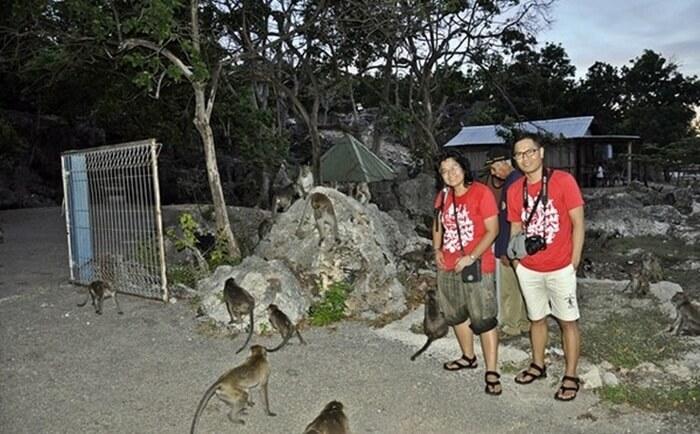 Monyet-monyet yang berkeliaran di kawasan tempat wisata Kupang Gua Monyet merupakan pemandangan keseharian bagi pengguna jalan menuju Pelabuhan Tenau-Kupang.