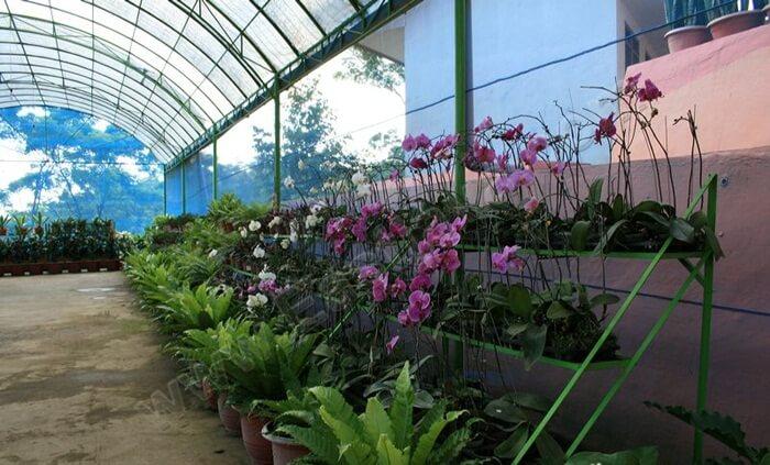 Sien Orchid adalah sebuah tempat wisata Tretes berupa perkebunan Anggrek dengan konsep wisata agro