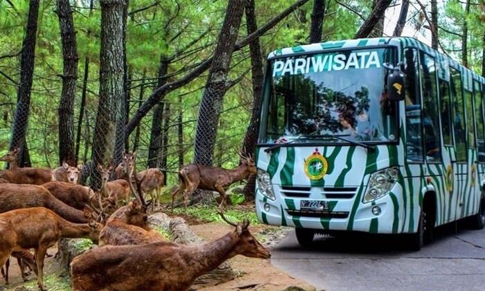 Taman Safari Prigen tempat wisata Tretes ini merupakan salah satu dari tiga Taman Safari terbesar yang ada di Indonesia