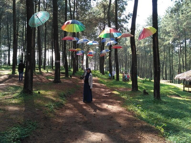 Mengabadikan Keindahan Sikembang Park