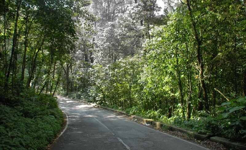 Jalan Menuju Tahura Raden Soerjo
