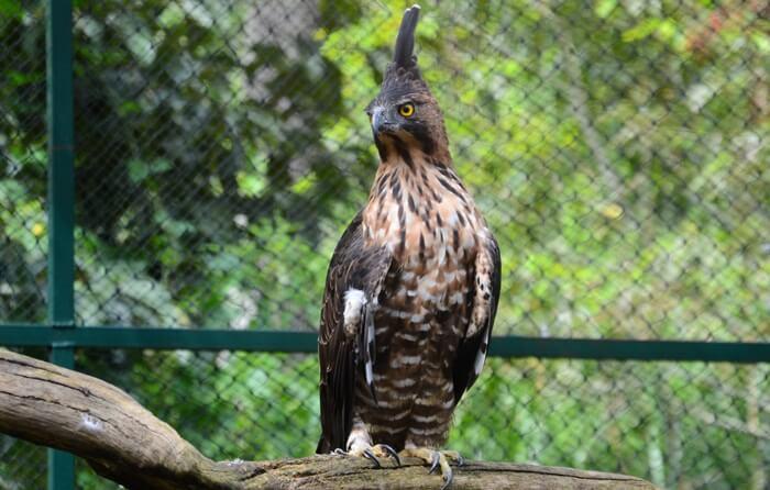Namun, pengunjung hanya diperbolehkan melihat dan memelajari langsung perilaku serta jenis elang di Kandang Display