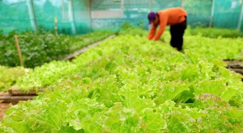 Kebun Organik di Agrowisata Amanah