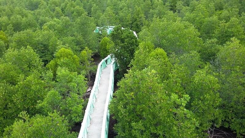 Ragam Mangrove Di Hutan Mangrove Langsa