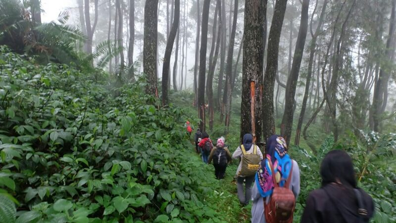 Tracking Diantara Pohon Pinus
