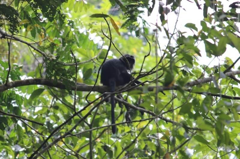 Keberadaan Monyet Dan Lutung Di Jalur Trekking