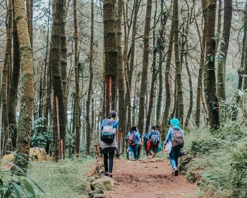Trekking Melalui Hutan Pinus