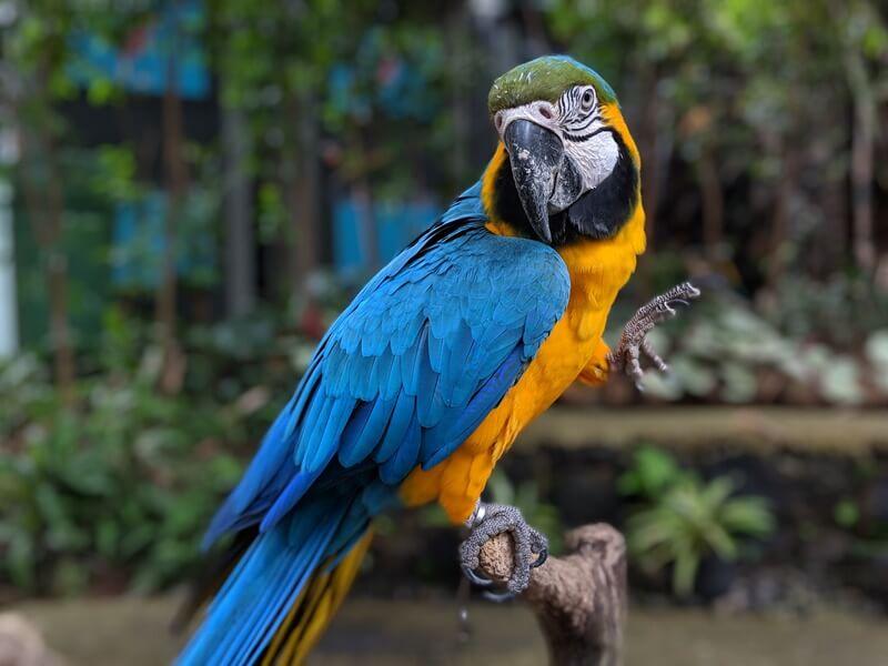 salah satu koleksi burung di bird pavilion