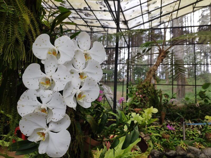 taman anggrek orchid forest lembang