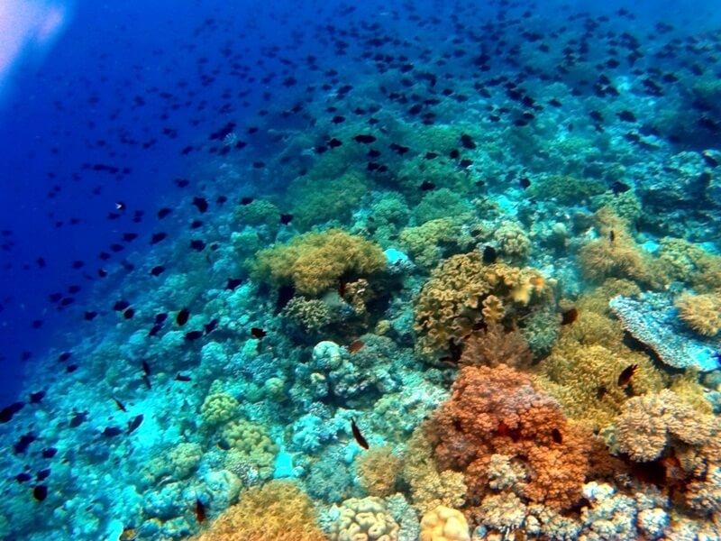 keindahan bawah laut pulau tomia